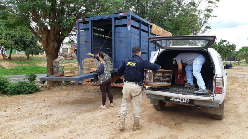 Mais de 300 animais silvestres são resgatados durante operação em 13 cidades baianas