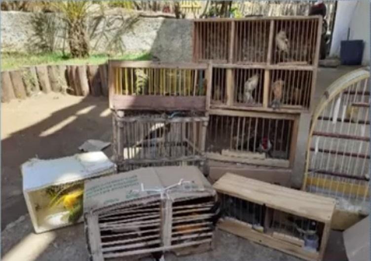 Cerca de 40 pássaros silvestres são apreendidos em fiscalização da polícia no sudoeste da Bahia