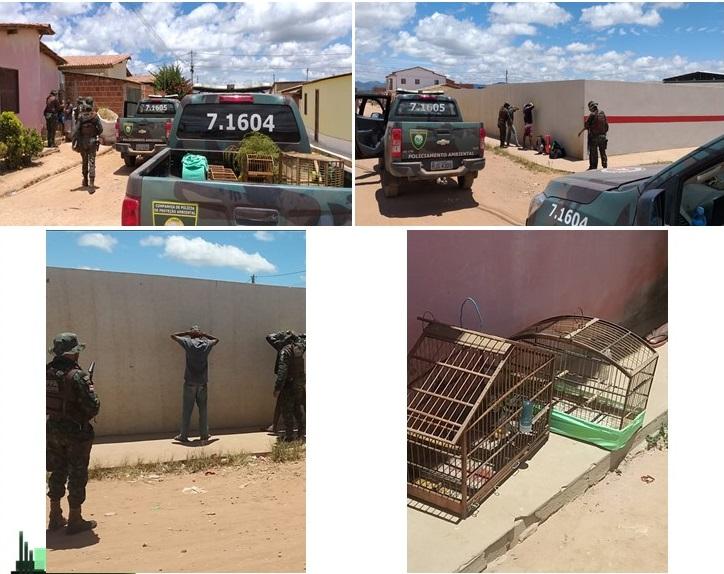 CIPPA Lençóis realiza abordagens, apreende arma de fogo e resgata aves silvestres em Ibicoara