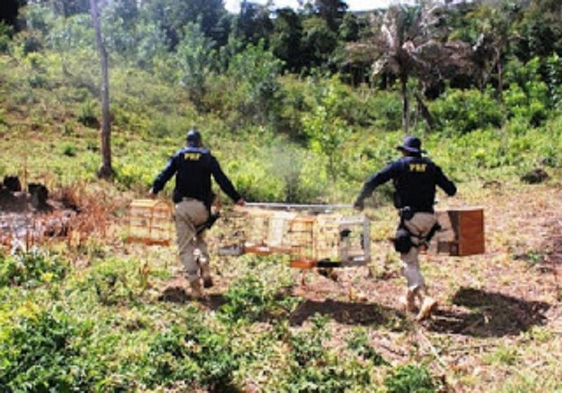 Animais silvestres são apreendidos na Bahia durante fiscalização
