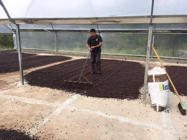 Chapada Diamantina é destaque na produção de café da agricultura familiar que conquistou o mundo