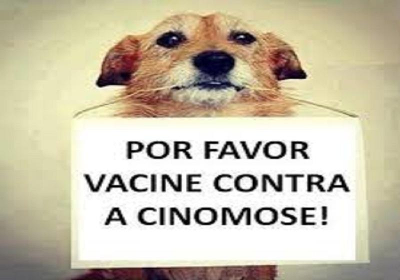 Doença canina assusta moradores de Palmeiras