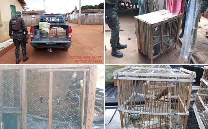 CIPPA Lençóis resgata aves silvestres em Andaraí